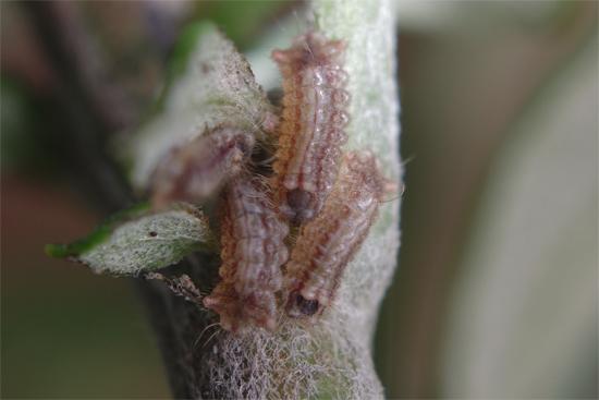 蟻と共に -2-_e0167571_2385121.jpg