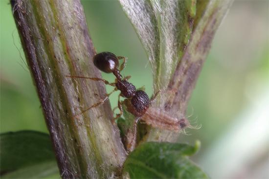 蟻と共に -2-_e0167571_2392549.jpg