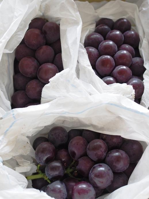福岡の葡萄と秋田の鮎_e0148373_16573492.jpg