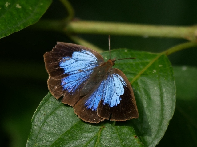 蝶と蛾と蝉_d0088184_20481218.jpg