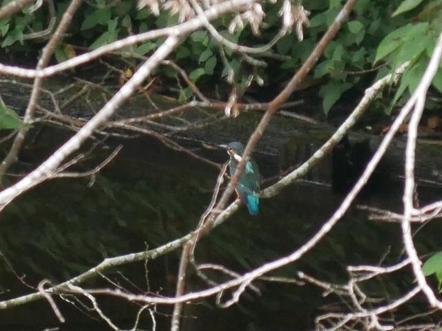 蝶と蛾と蝉_d0088184_20504332.jpg