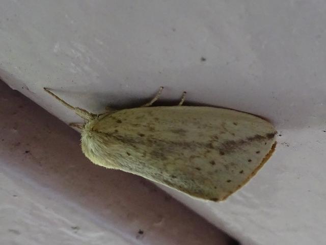 蝶と蛾と蝉_d0088184_20570447.jpg