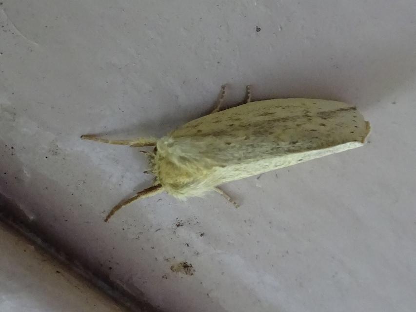 蝶と蛾と蝉_d0088184_20571592.jpg