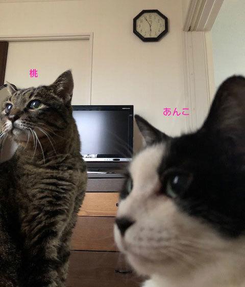 サブレの卒業の朝&迷子かな?キジトラ長毛男子_d0071596_22000125.jpg