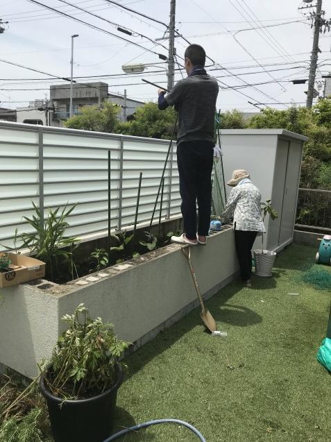 家庭菜園2019_a0113003_13311887.jpg
