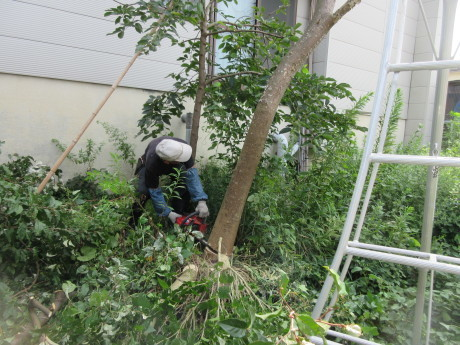 合歓の木を切る_a0203003_11304416.jpg
