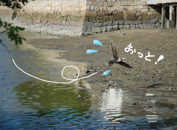 きょうも川が呼んでいる_d0359503_11083893.jpg