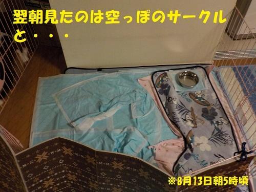 f0121712_15254167.jpg