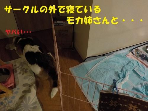 f0121712_15323494.jpg
