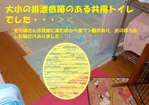 f0121712_15324134.jpg