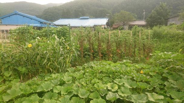 自然農のワクワク畑_e0015223_09095974.jpg