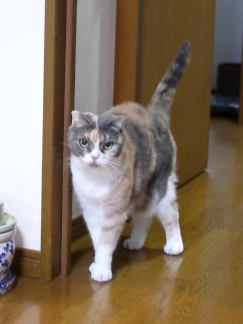 猫のお留守番 マミちゃん編。_a0143140_16501000.jpg