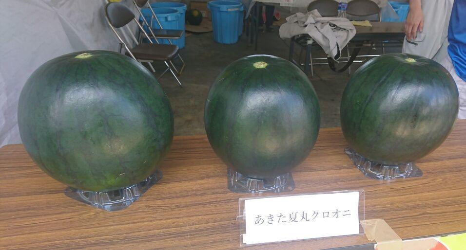 農業試験場_f0081443_19571912.jpg