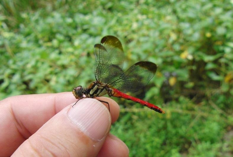 蜻蛉ぢゃ_c0065260_13590080.jpg