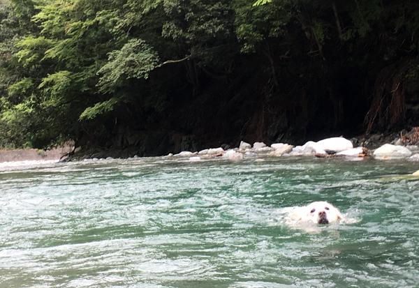 今日も泳ぎまくり!_c0110361_09371405.jpg