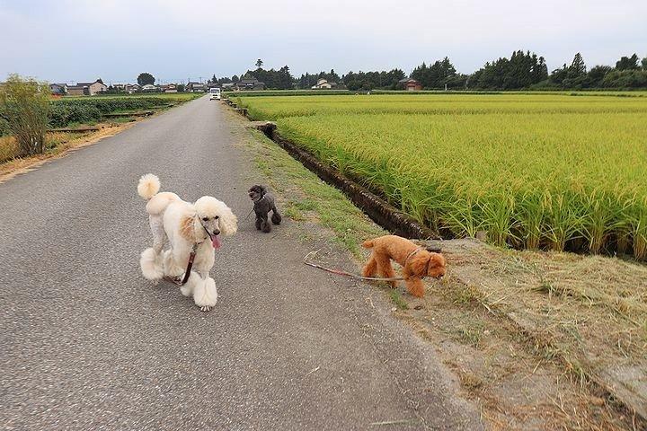 富山に来ています。_b0111376_17093904.jpg