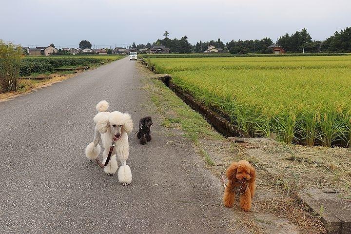 富山に来ています。_b0111376_17103402.jpg