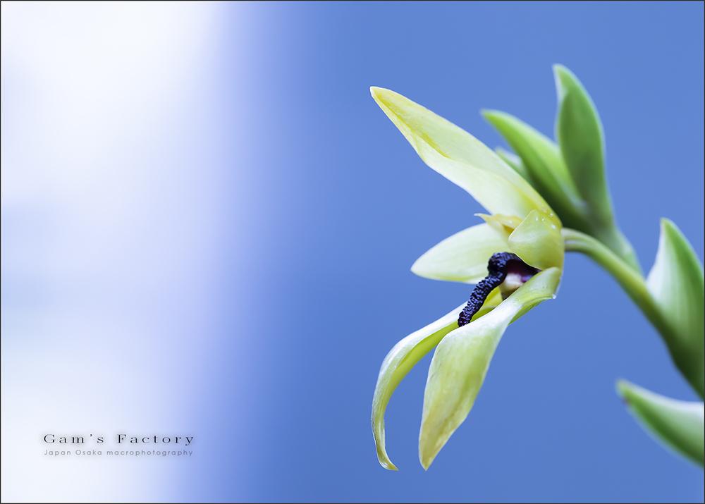 Blue_f0195893_17281104.jpg