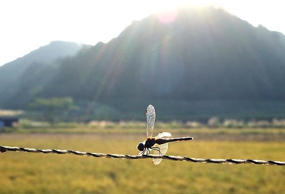 羽を鳴らして飛び交うトンボさん_b0145296_16002303.jpg