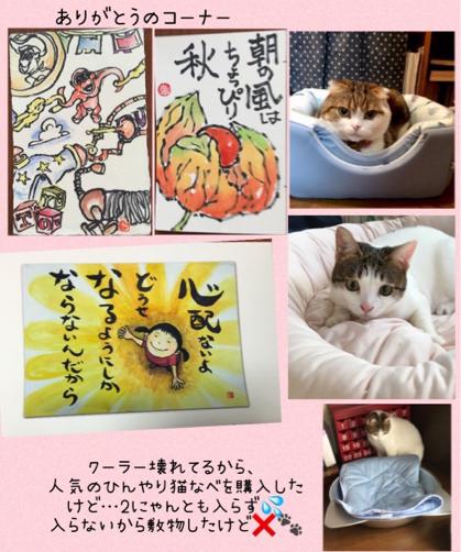 ジョウちゃんショコラちゃん たんたんいこ_f0375804_08573887.jpg