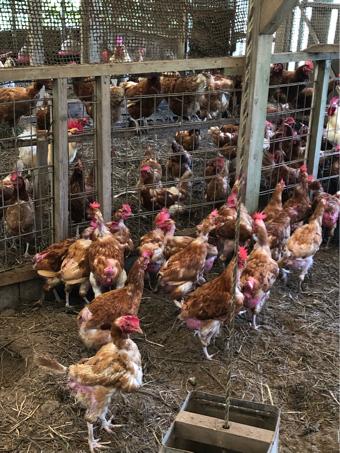 鶏さんから命を学ぶ_c0176406_12225792.jpg