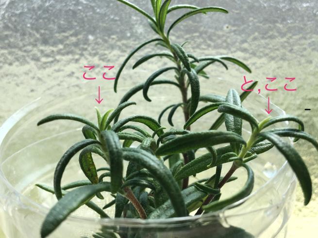 たくましい植物たち_c0076939_23363461.jpg