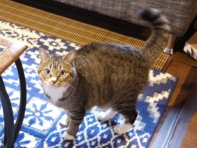 猫のお留守番 らんまるくん編。_a0143140_21150985.jpg