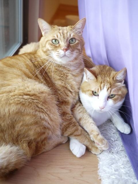 猫のお留守番 あずきくんきなこくん編。_a0143140_21171908.jpg