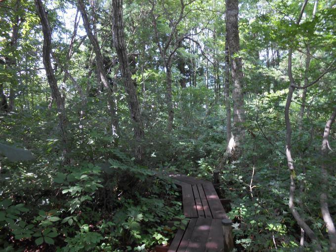 「我が家の林のガーデン」に行きました。_a0385740_12112018.jpg
