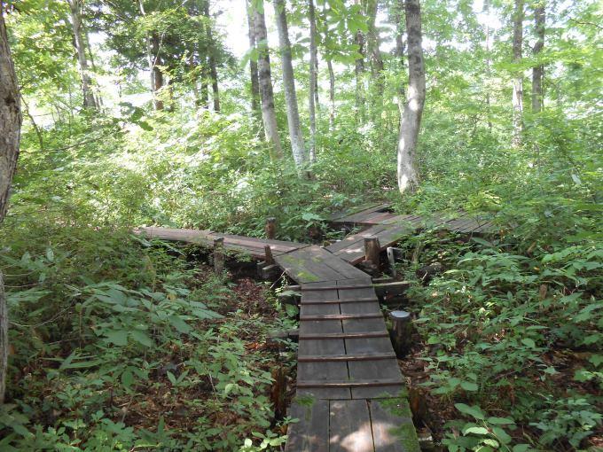 「我が家の林のガーデン」に行きました。_a0385740_12113037.jpg