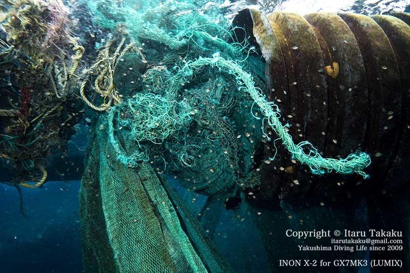 雷ときどき漂流寸前!〜海洋ゴミの脅威やら夏の華〜_b0186442_21085759.jpg