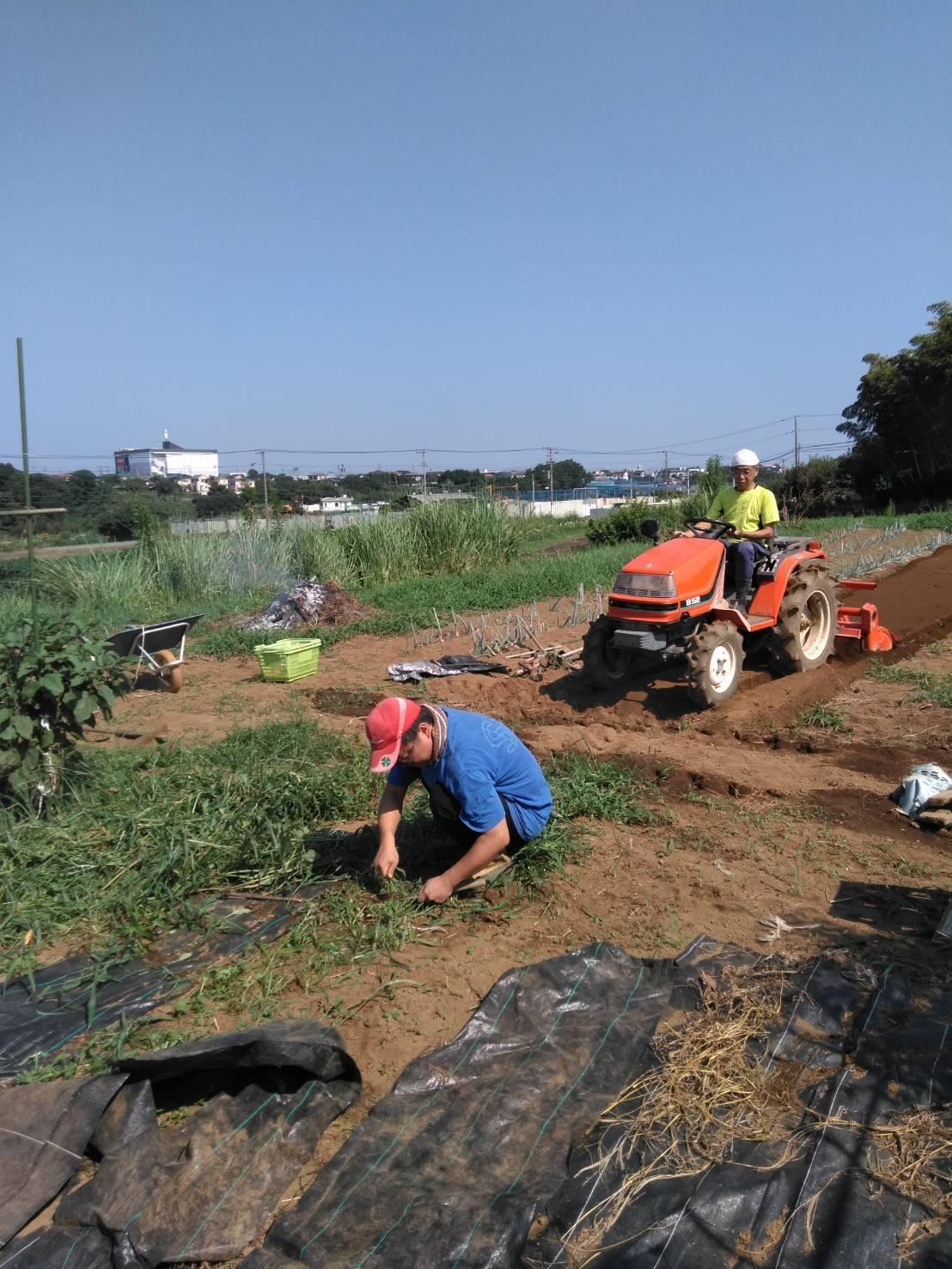 冬野菜の畝作り・・・開始します_c0222448_11570719.jpg