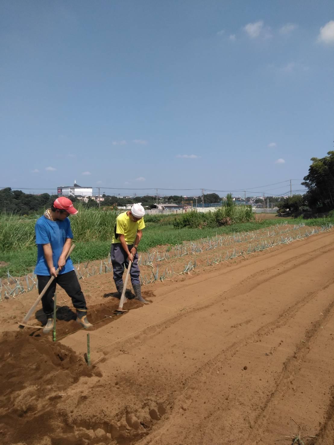 冬野菜の畝作り・・・開始します_c0222448_11571726.jpg