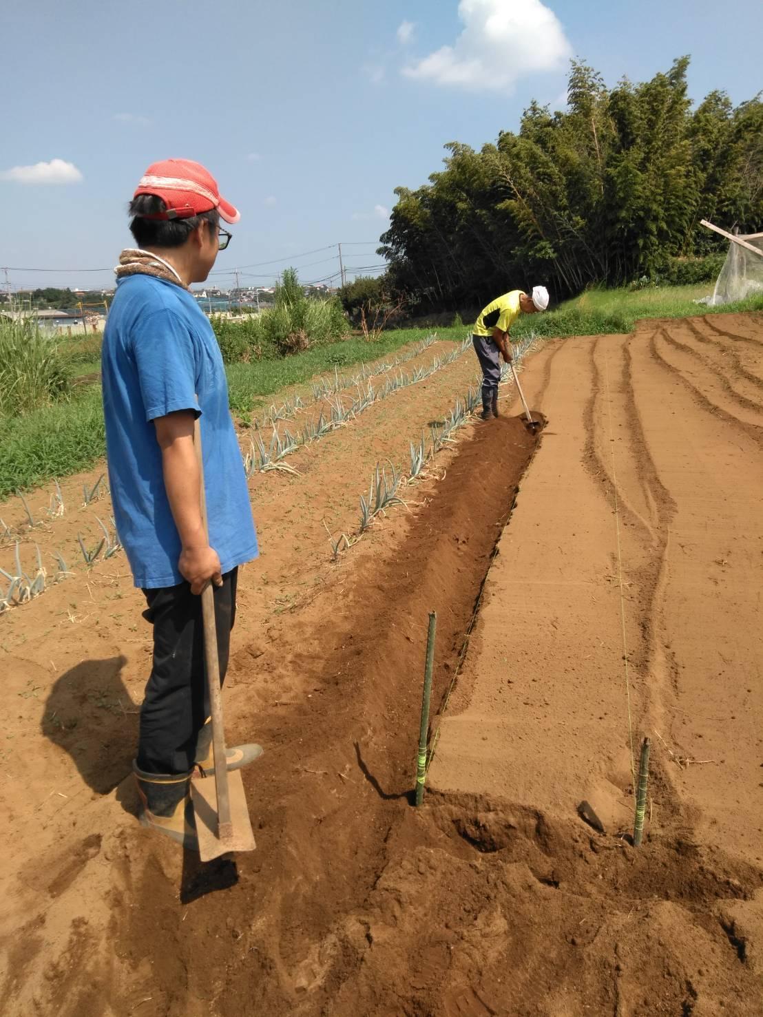 冬野菜の畝作り・・・開始します_c0222448_11573947.jpg