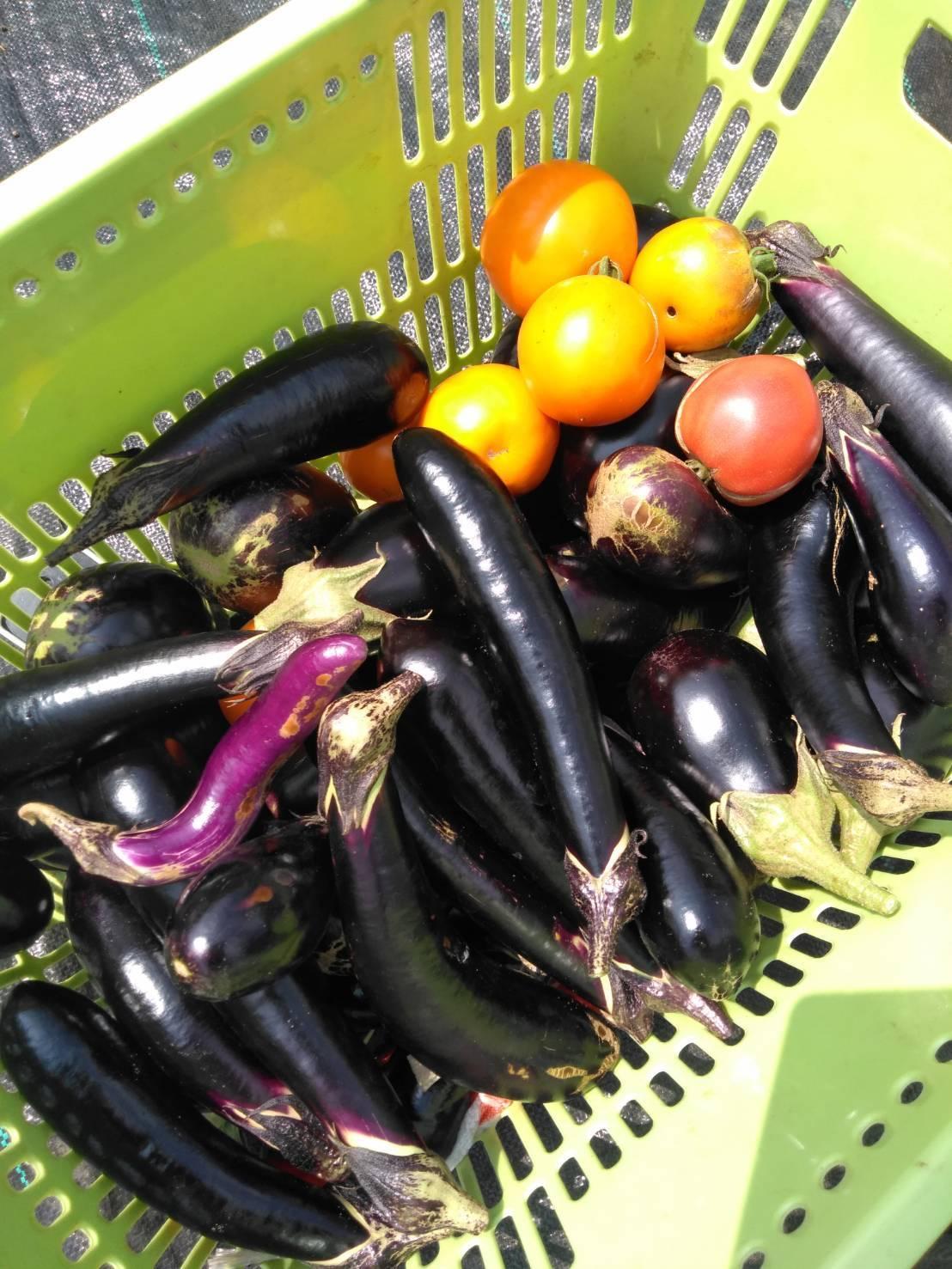 冬野菜の畝作り・・・開始します_c0222448_11575185.jpg