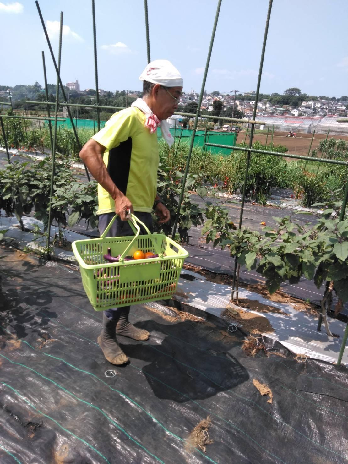 冬野菜の畝作り・・・開始します_c0222448_13143616.jpg