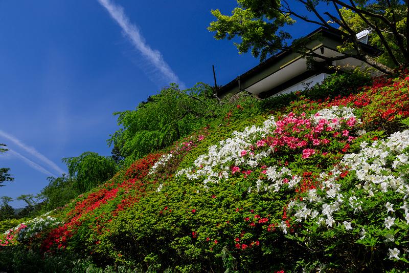 新緑と春の花々(石山寺)_f0155048_224691.jpg