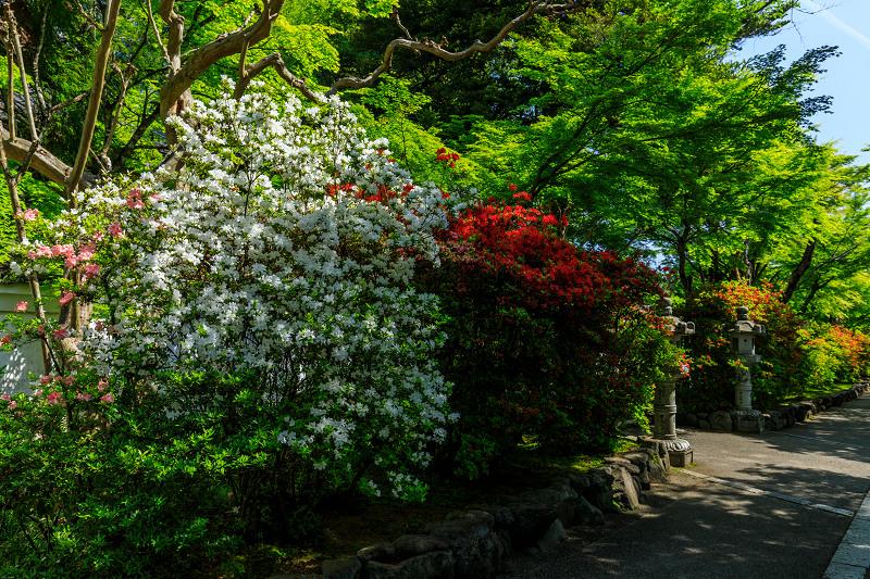 新緑と春の花々(石山寺)_f0155048_22571230.jpg