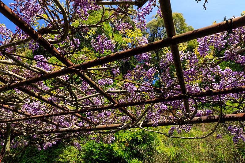 新緑と春の花々(石山寺)_f0155048_22574671.jpg