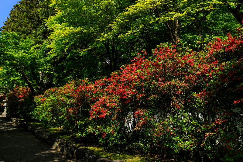 新緑と春の花々(石山寺)_f0155048_2257947.jpg
