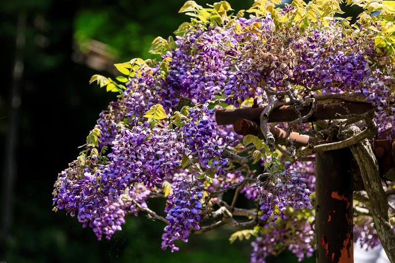 新緑と春の花々(石山寺)_f0155048_22581715.jpg
