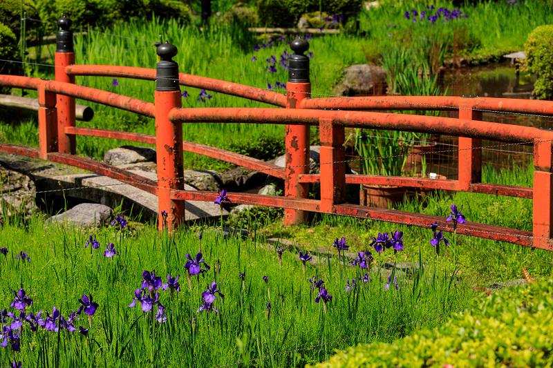 新緑と春の花々(石山寺)_f0155048_2258239.jpg