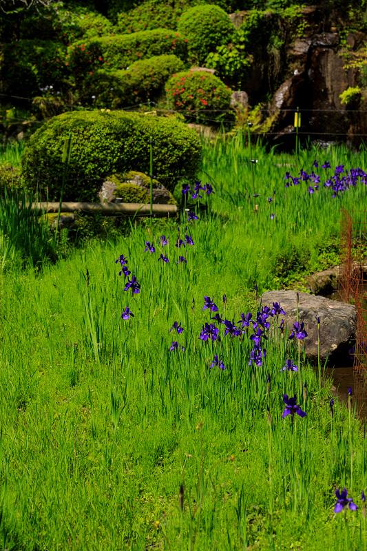 新緑と春の花々(石山寺)_f0155048_22584220.jpg