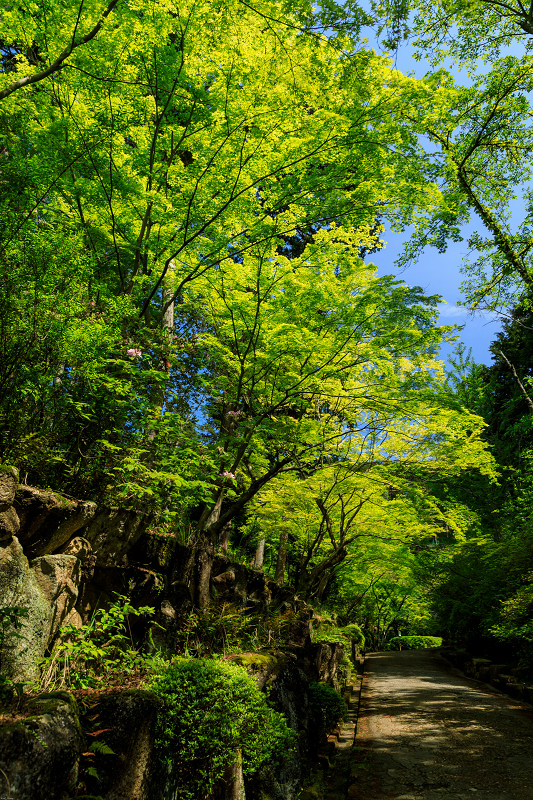 新緑と春の花々(石山寺)_f0155048_22591773.jpg