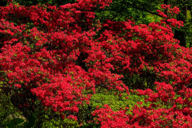 新緑と春の花々(石山寺)_f0155048_231126.jpg