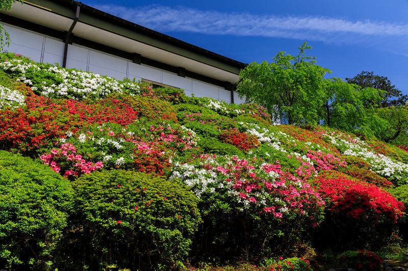 新緑と春の花々(石山寺)_f0155048_23112737.jpg