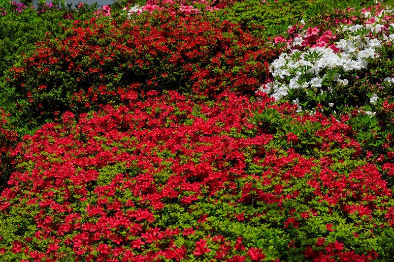 新緑と春の花々(石山寺)_f0155048_23114410.jpg