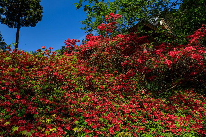 新緑と春の花々(石山寺)_f0155048_231151.jpg