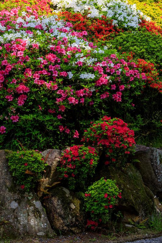 新緑と春の花々(石山寺)_f0155048_2311780.jpg