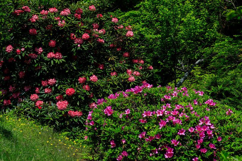 新緑と春の花々(石山寺)_f0155048_23121171.jpg